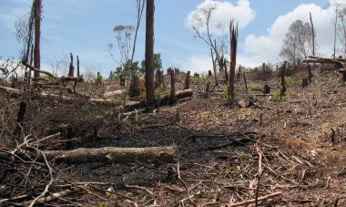 konservasi air dan lahan kritis serta pemanfaatan lahan kritis